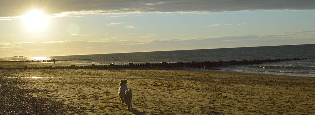 Dog freindly Norfolk